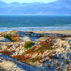 grover-beach-dunes_3859