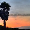 palm-tree-grover-beach_0591