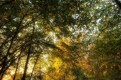 Autumn ceiling