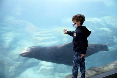 Aquarium reopening