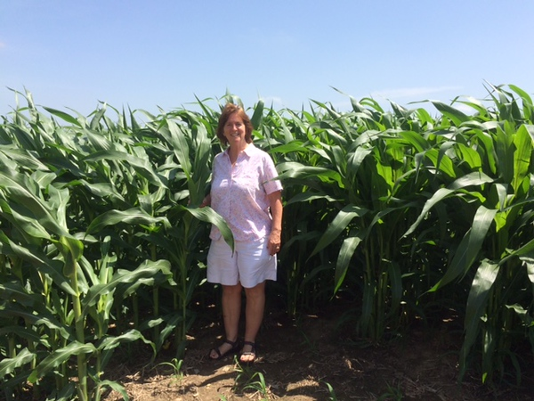"""New picture of Janet showing how tall the corn was the week after...it was only about 10""""s when we arrived"""