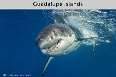 Guadalupe Islands, Mexico