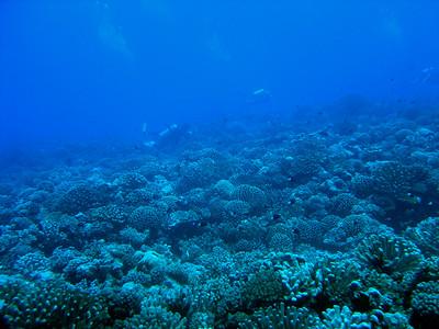 11-Mile Reef - 8/27/06