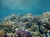 Coral reef community in the Tumon Bay Marine Preserve, Guam