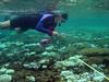 NOAA Fisheries scientist performing coral bleaching survey