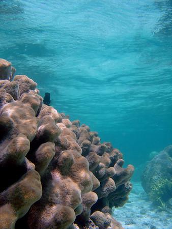 Luminao Reef - 4/29/06