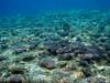 Coral growth behind the U. of Guam Marine Lab