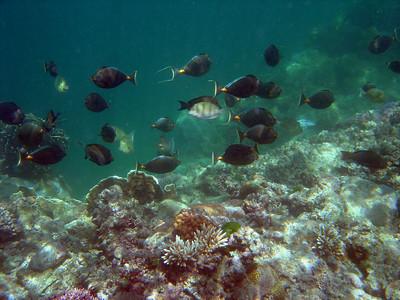 Achang Reef Flat MPA - 8/19/05