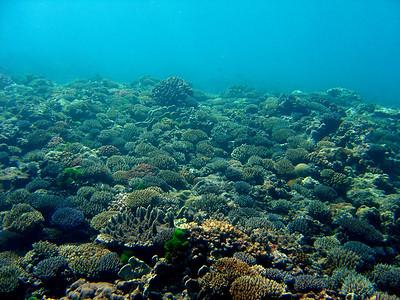 Ipan Reef - 9/25/05