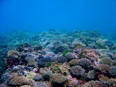 Snorkeling near Ipan Beach Park - 8/14/05