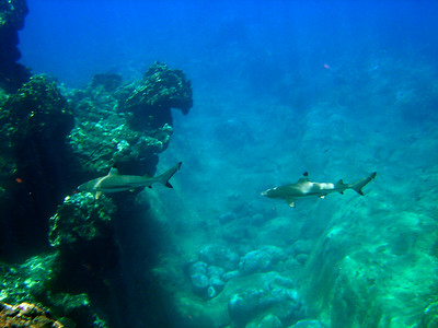Snorkeling near Salugula Pools - 8/19/05
