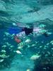 Snorkeler swimming through school of fish (Chromis viridis)