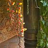 Hanging flora.