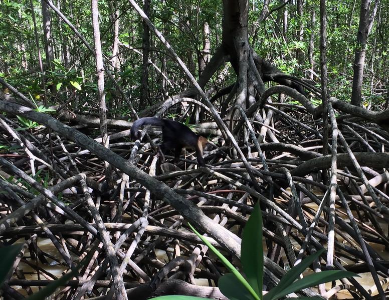 Monkeys observed in their natural habitat