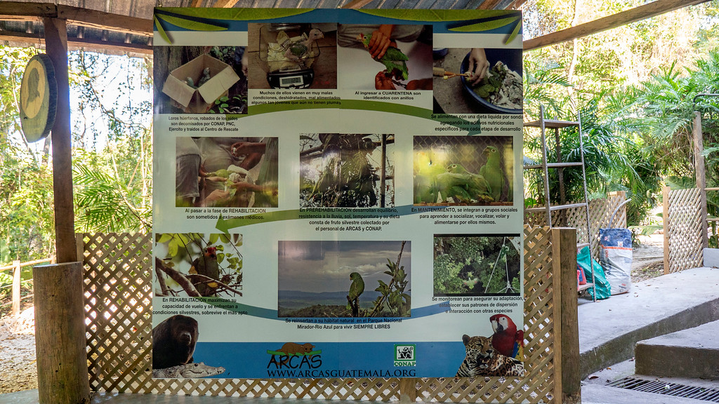 Volunteering with Animals in Guatemala: Life cycle of trafficking parrots