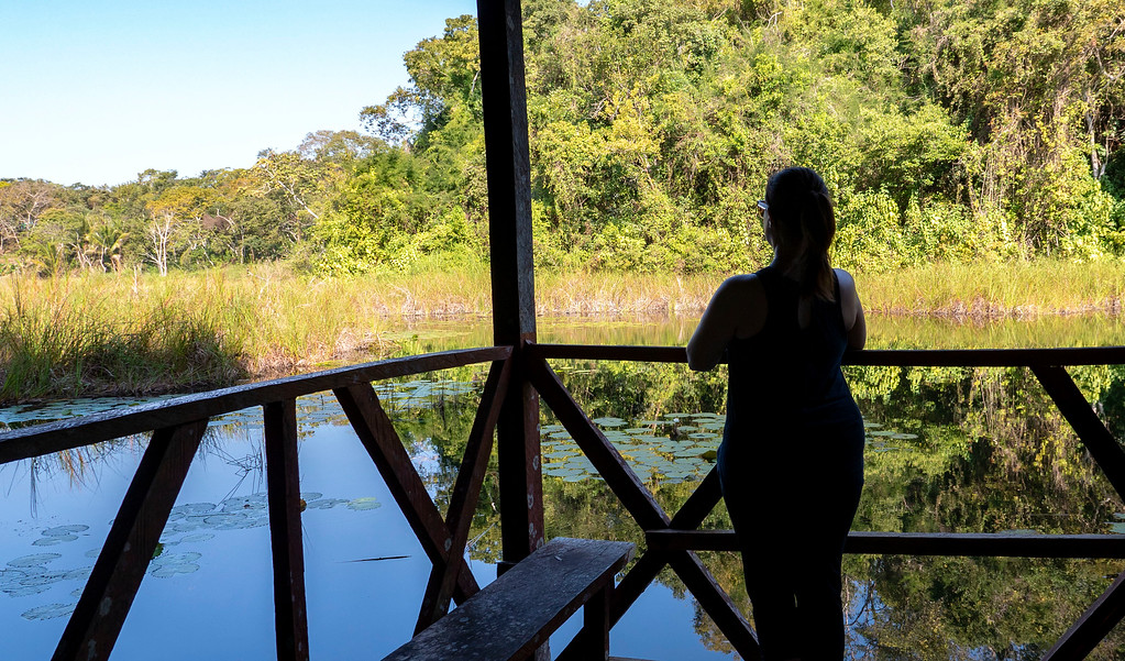 Volunteering with Animals in Guatemala: Living in the jungle at ARCAS