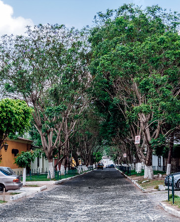 Trees covering a street in Antigua Guatemala.