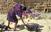 A woman in traditional dress feeding the pigs at the pig market in Chichicastenango, Guatemala, Central America.