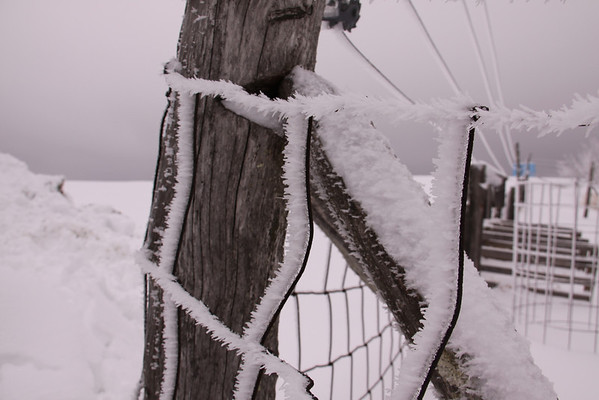 Hoar frost or ice again... the straight wires above the fence is to keep the deer from jumping into my parents garden.