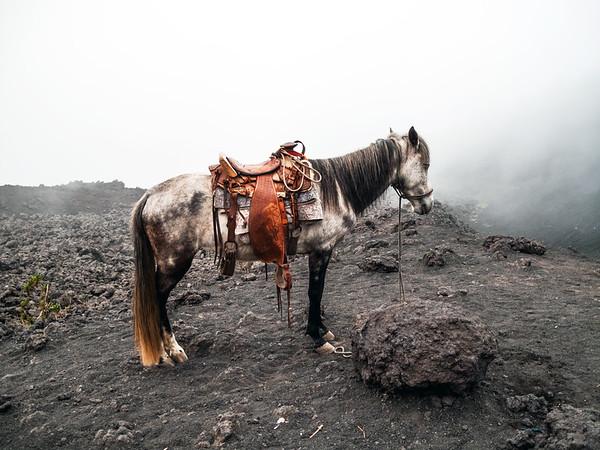 Horse on Pacaya Volcano, Guatemala