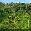 Tropical forest along the Rio Dulce River in Guatemala