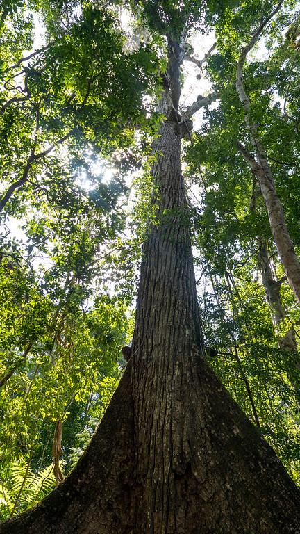 Tikal National Park - Maya Biosphere Reserve