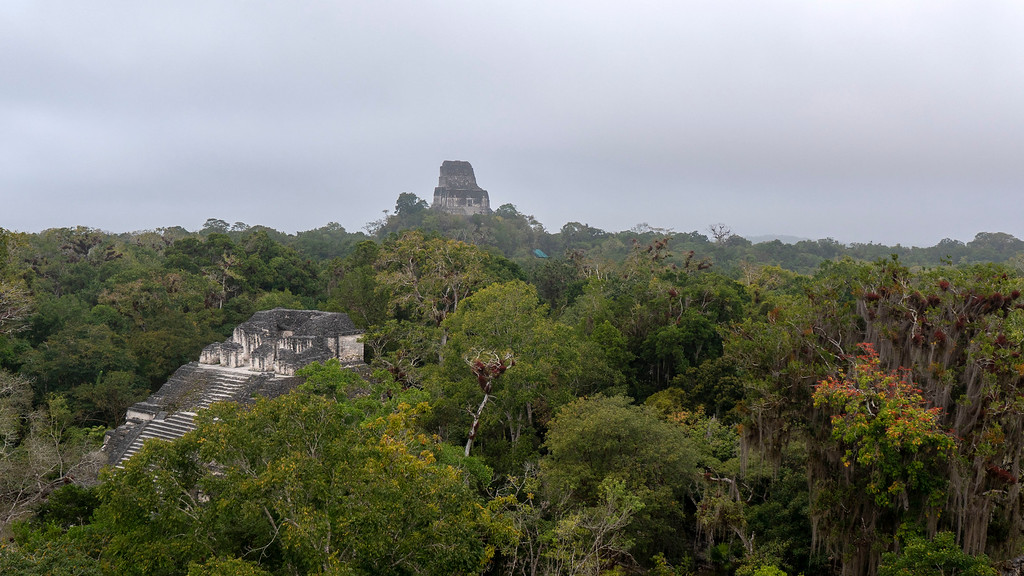 Tikal Guatemala: View from the top of the Great Pyramid of the Lost World
