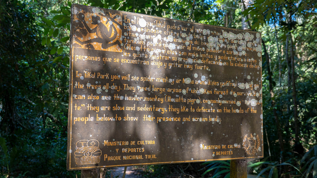 The Ultimate Guide to Visiting the Tikal Maya Ruins