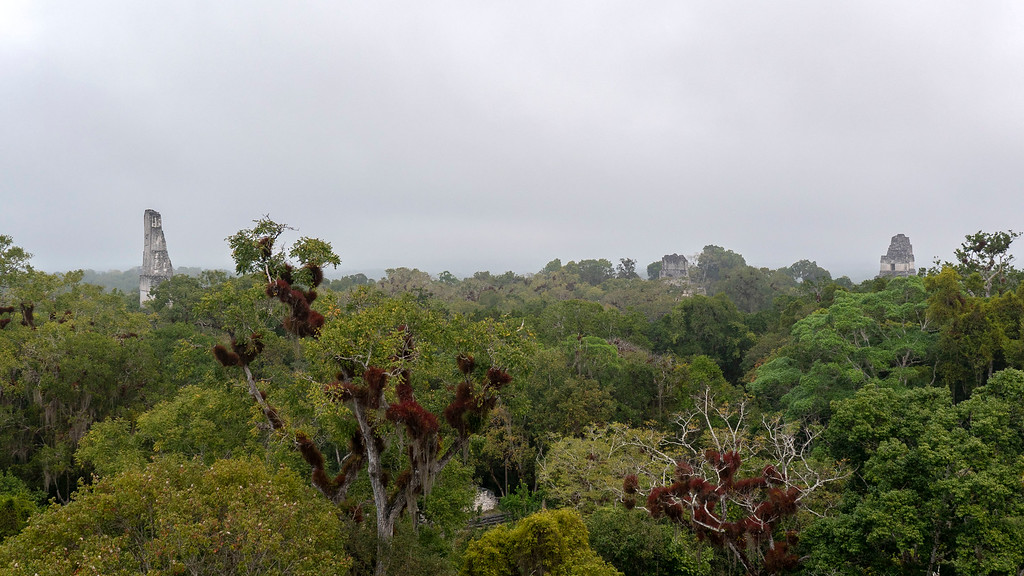 Tikal Guatemala: Scenery from the top of the Great Pyramid of the Lost World