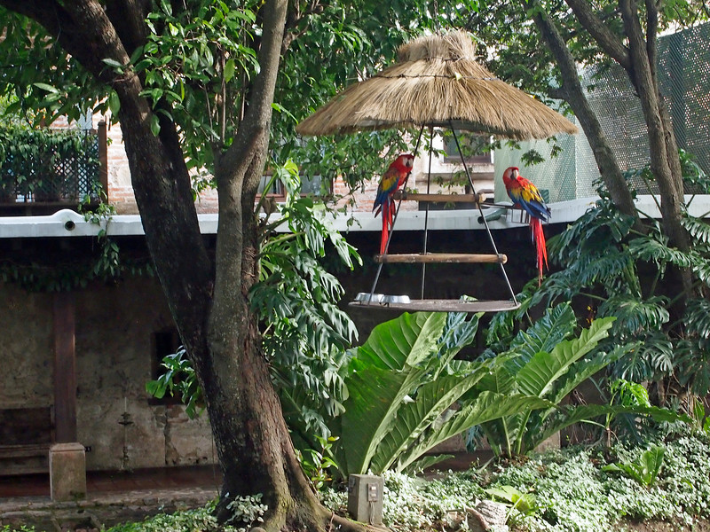 Casa Santo Domingo Parrots