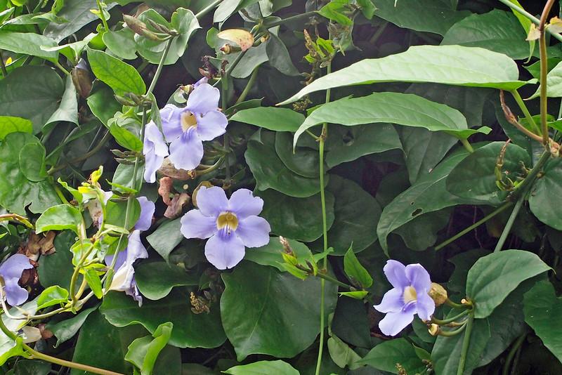 Garden at Hotel Atitlan