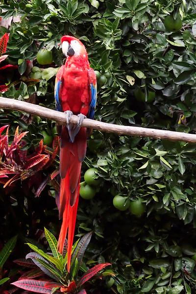 Macaw posing