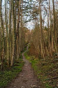 Trail to Guemes Mountain