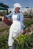 Elizabeth Went picks vegetables from the Victorian Walled Kitchen Garden