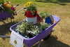 Vauvert Primary School wheelbarrow floral display
