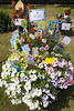 St Mary & St Michael Primary School's wheelbarrow floral display