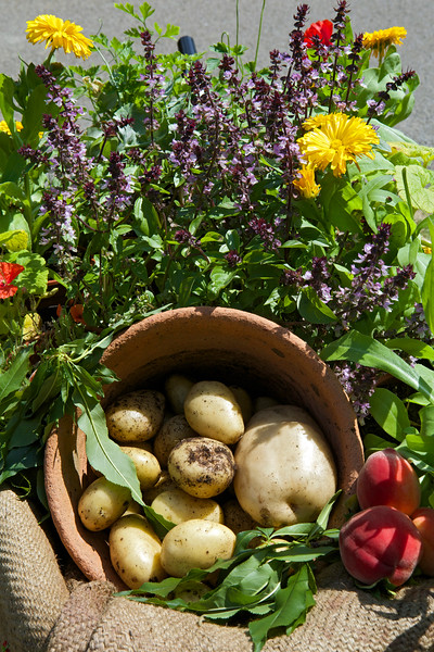 A Magical Day in the Park wheelbarrow fruit and vegetables 090714 ©RLLord 3885 v smg