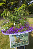 Herm Island infant school's floral display in a wheelbarrow