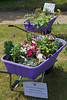 Guernsey Primary school wheelbarrow competition entries