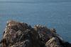 Les Etacs gannets 011009