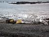 Save Belle Greve Bay march 261106 4625 smg