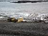 Save Belle Greve Bay march 261106 4626 smg