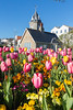 Tulips in a flowerbed by the Weighbridge roundabout, St Peter Port, Guernsey