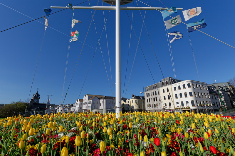 A flowerbed of yellow tulips surrounds the Weighbridge Mast at the centre of the Weighbridge roundabout in St Peter Port, Guernsey