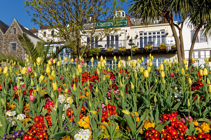 A flowerbed in North Plantation, St Peter Port, Guernsey
