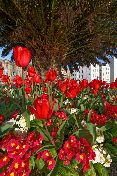 A flower bed in the early morning light in St Peter Port, Guernsey