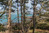 Rocquaine Bay view through pine trees 130316 ©RLLord 7354 smg