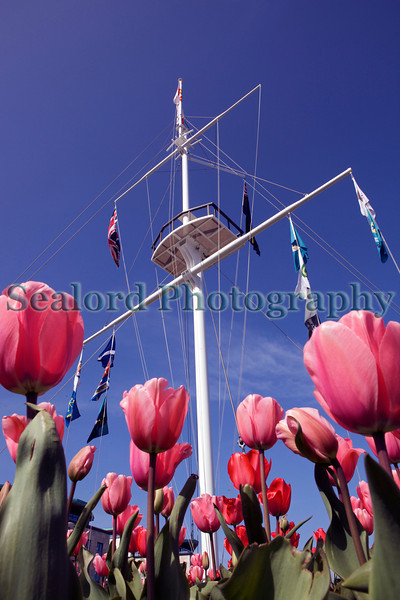 Pink tulips under the mast at the Weighbridge roundabout, St Peter Port, Guernsey