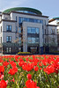 Red tulips on the Weighbridge roundabout in St Peter Port, Guernsey