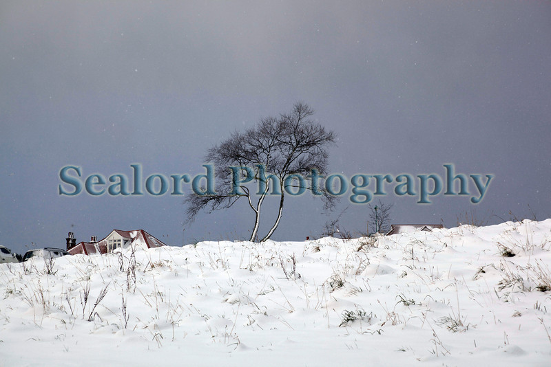 A snow covered tree stands at the top of Les Val des Terres, St. Peter Port, Guernsey, Channel Islands.  On 2 February 2009 Guernsey received its heaviest snow fall in 18 years.<br /> File No.  020209 1085<br /> ©RLLord<br /> fishinfo@guernsey.net
